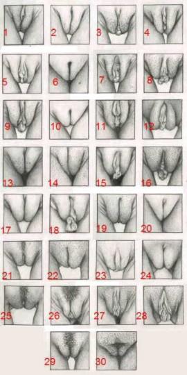 Vaginas