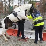 Caballo viola a policia